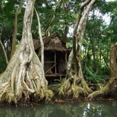 ...tu też kręcili Piratów z Karaibów, Indian River, Dominika