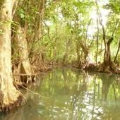 Indian River, Dominika