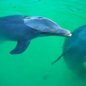..delfiny..