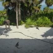 ..oglądaliśmy dzikie zwierzęta...