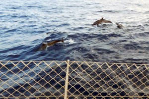 ..i oglądaliśmy delfiny!